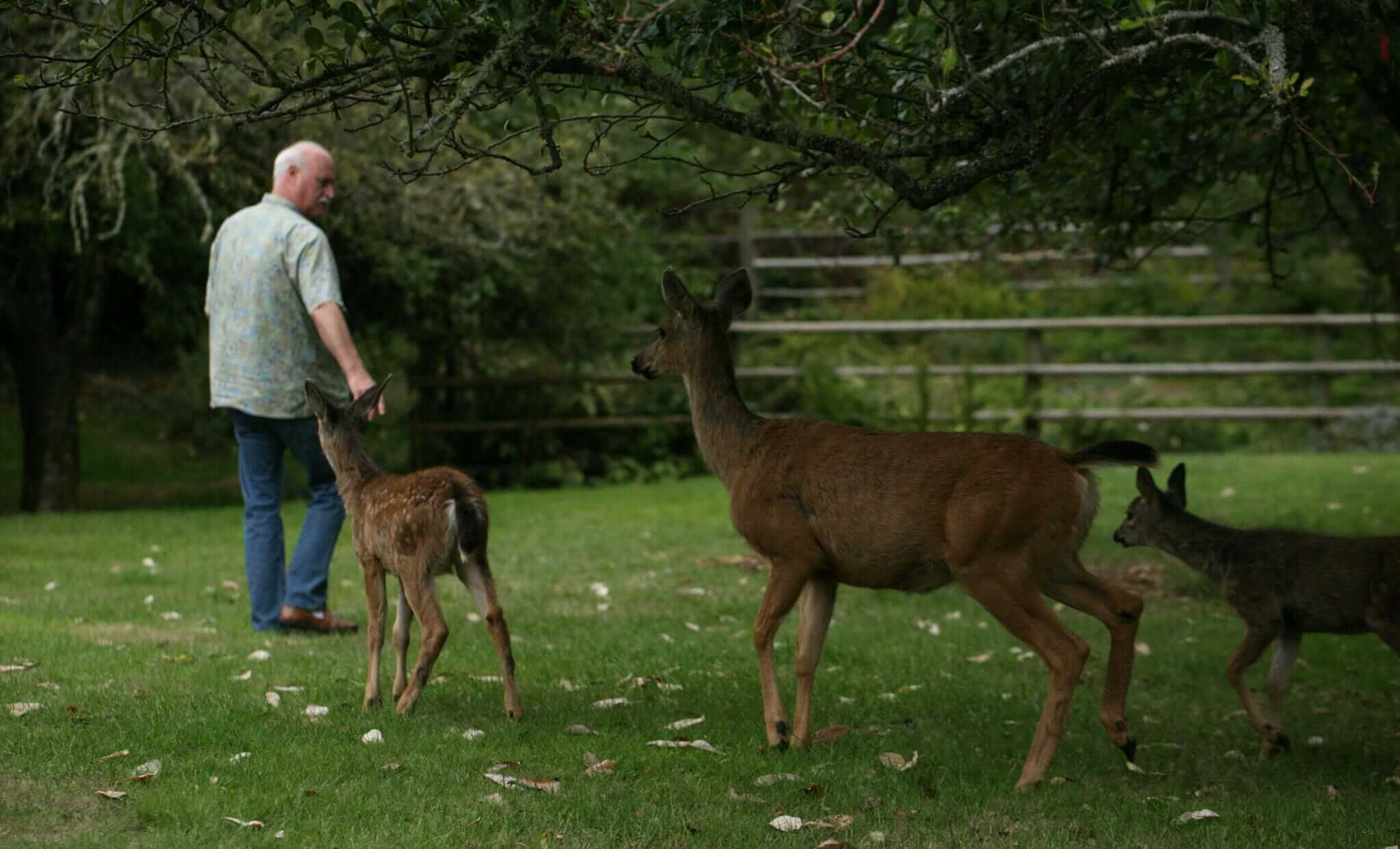 4-ron-followed-by-deer-g-img_1398