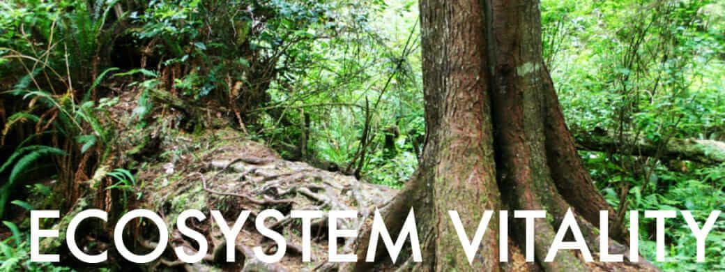 Ecosystem Vitality