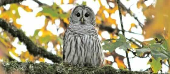 OwlFeature