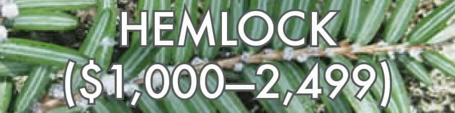 Hemlock ($1000–2499)
